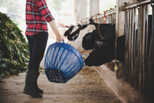 young-woman-working-with-hay-cows-dairy-farm_1150-12772 (1)